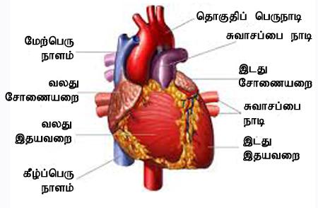 Irudhayam5