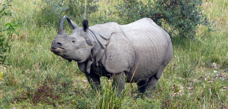 rhinoceros fi