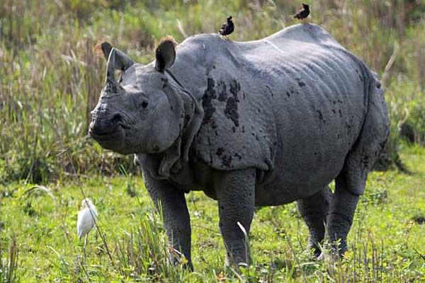 rhinoceros8