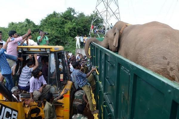 Siragu elephant1