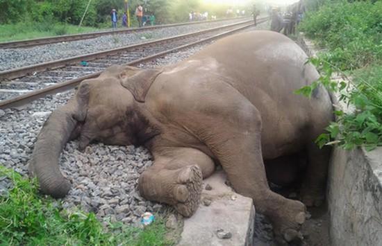 Siragu elephant2