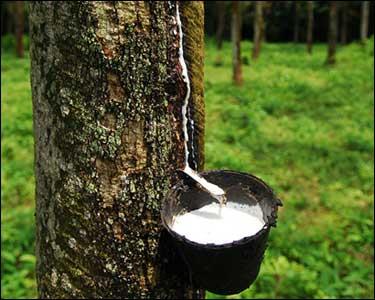 Siragu rubber article5