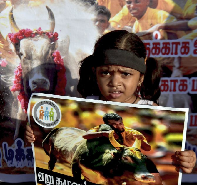 Protest against Jallikattu ban