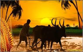 siragu tamil paavai2
